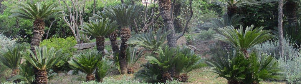 Visita a l'antic jardí botànic de Barcelona