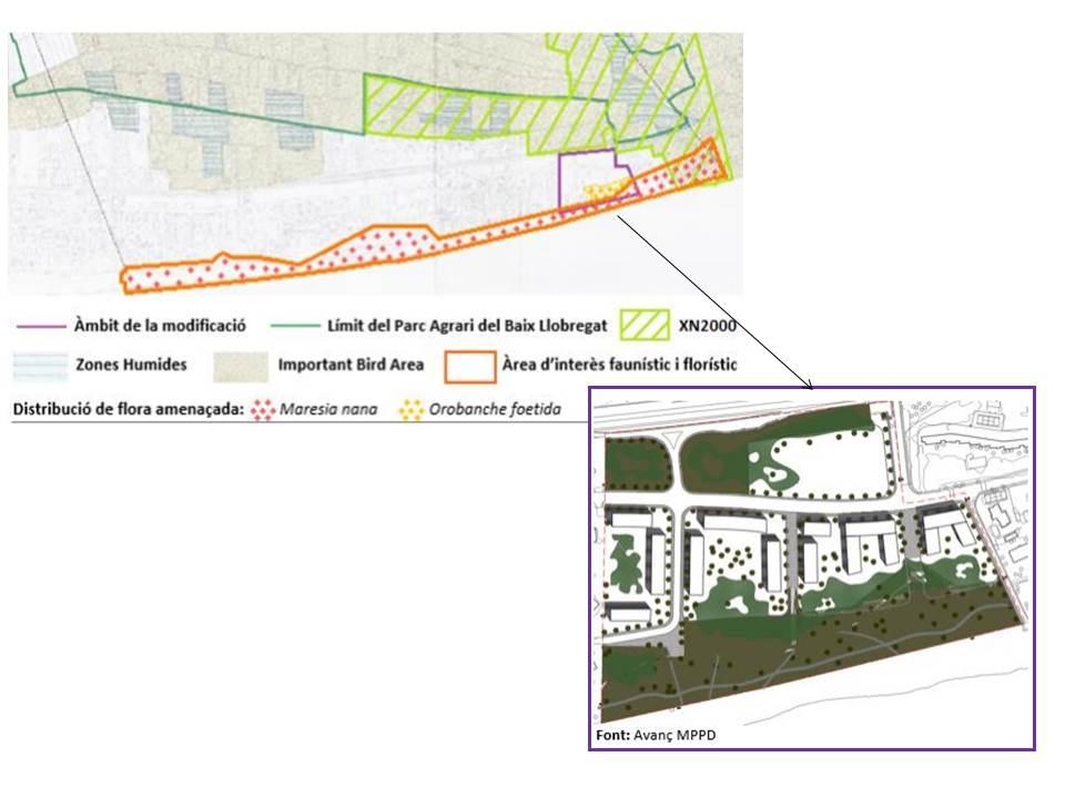 AL·LEGACIONS. Imatge de l'àmbit de la modificació, amb la distribució de les diferents zones humides, XN2000, àrea d'interès faunístic i florístic. i distribució de flora amenaçada.