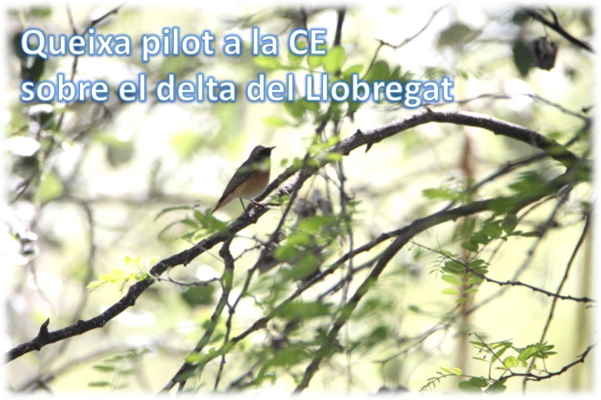 Queixa pilot a la CE sobre el delta del Llobregat